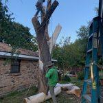 Img 1481 Tree Climb