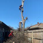 Img 2011 Tree Climb